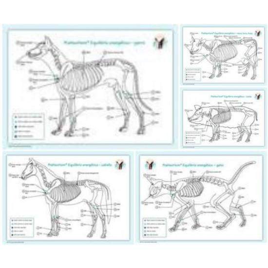 KIT Láminas animales A4