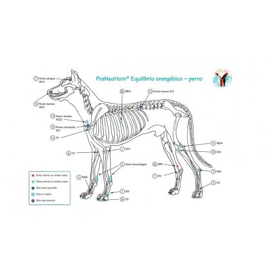 Lámina acupuntura perro A4