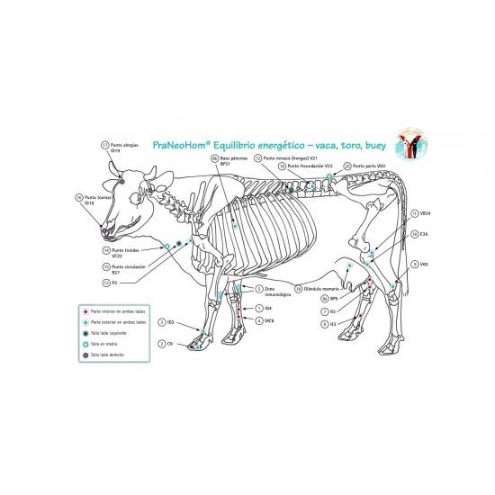 Lámina acupuntura vaca, toro, buey A4