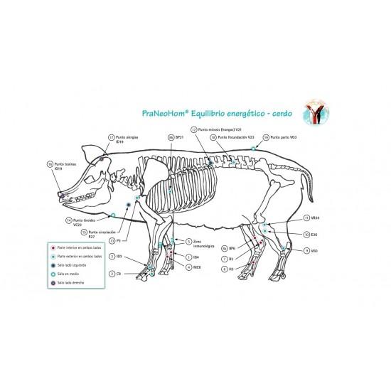 Lámina acupuntura cerdo A4