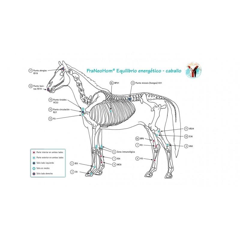 Lámina caballo A4