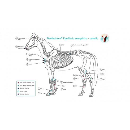 Lámina acupuntura caballo A4